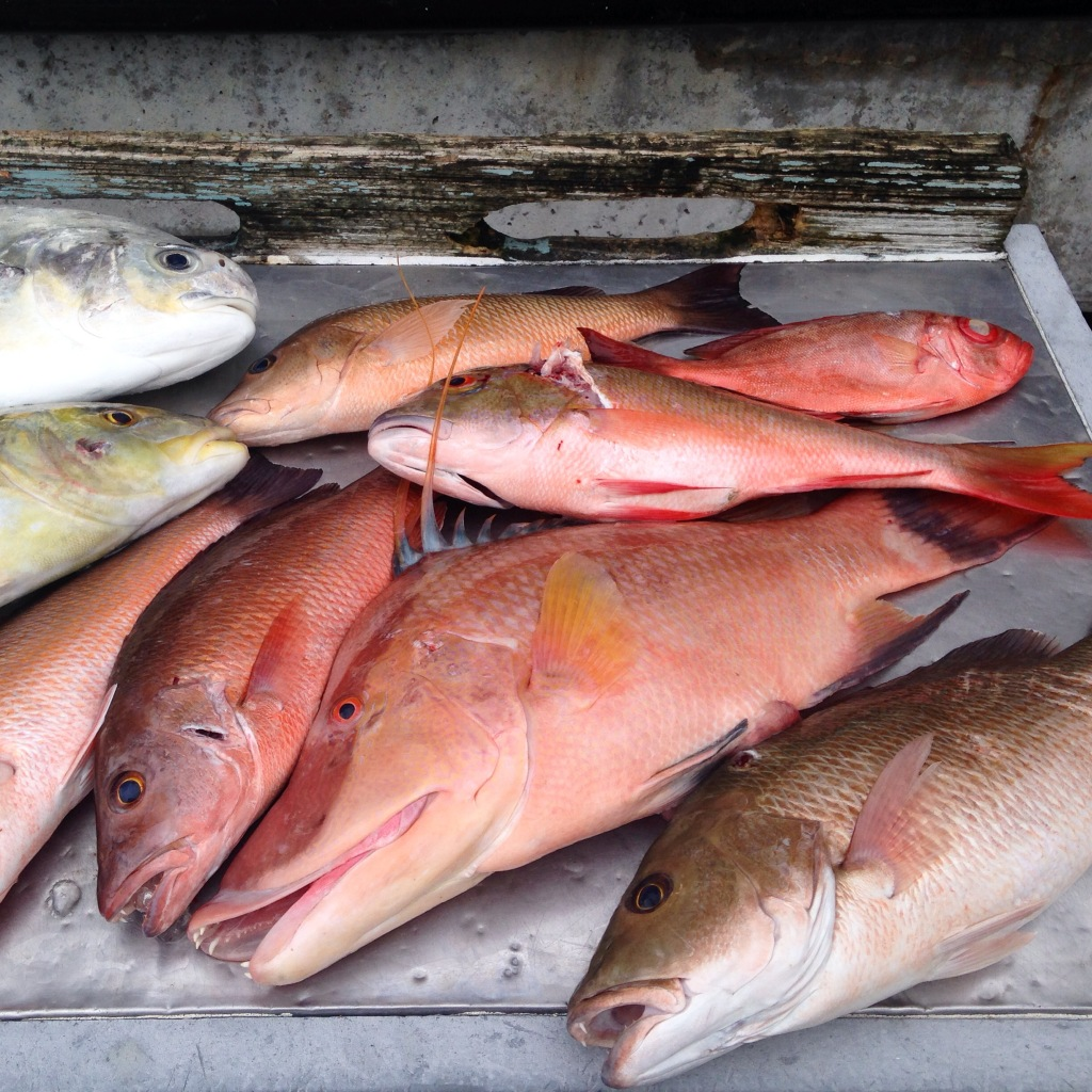 Big KW Hogfish April 30, 2015